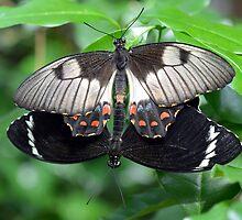 Loving Butterflies by Glenda Williams