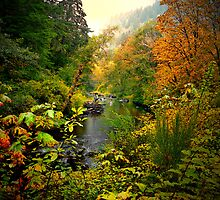 A View Of Fall by Charles & Patricia   Harkins ~ Picture Oregon