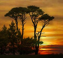 Silhouettes ! by Irene  Burdell