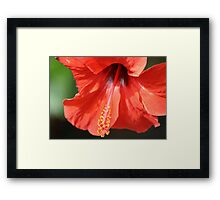 Red Petal and Anther with Pistil of Hibiscus Flower Framed Print