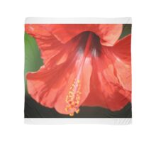 Red Petal and Anther with Pistil of Hibiscus Flower Scarf