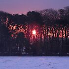 A Winter's Dawn by Sarah Jane Bingham