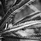 Banksia Brownii by Kell Rowe