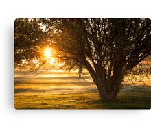 Crab Apple Tree Canvas Print