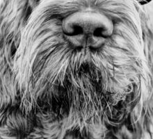 Brown Roan Italian Spinone Head Shot with Glasses Sticker
