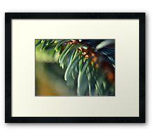 Morning Glow Blue Spruce Needles Framed Print