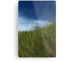 Slope of dune grass Metal Print