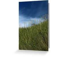 Slope of dune grass Greeting Card