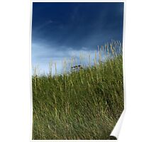 Slope of dune grass Poster