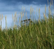 Slope of dune grass Sticker