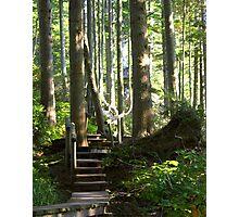 Hiking among Giants Photographic Print