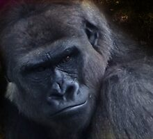 My name is Kong as in King Kong! by vigor