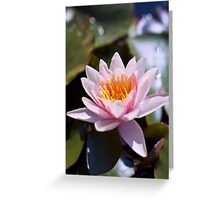 Hardy Water Lily Greeting Card