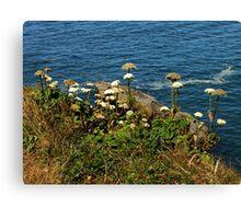 Coastal Nature ~ Part One Canvas Print