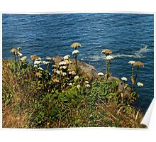 Coastal Nature ~ Part One Poster