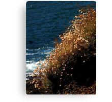 Coastal Nature ~ Part Two Canvas Print