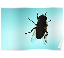 Fly view from below Poster