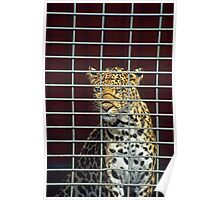 Leopard in cage Poster