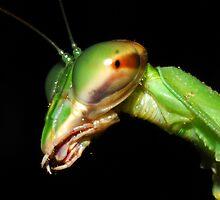 Mantis  by George Kashouh
