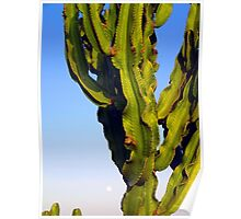 Cactus with moon Poster