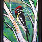 Yellow Bellied Sapsucker by Suzi Linden