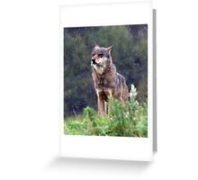 The leader of the pack Greeting Card
