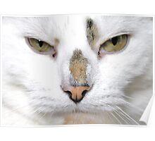 He-Cat Poster