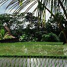 Ubud - Bali (Indonesia) by Juergen Weiss