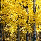 Fall in Alberta by Pam Hogg