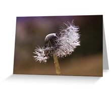 Fluffy dandelion drops Greeting Card