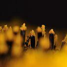 Sunflower 1:1 by Paul  Eden