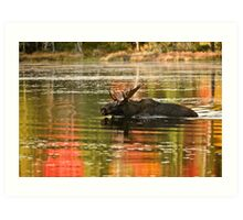 Bull Moose Crossing Creek Art Print