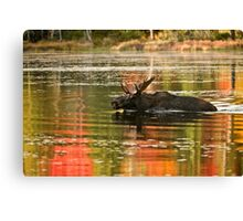 Bull Moose Crossing Creek Canvas Print