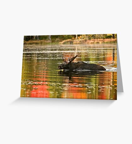Bull Moose Crossing Creek Greeting Card