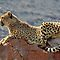 FAUNA, FLORA, LANDSCAPES AND ARCHITECTURE OF SOUTH AFRICA -