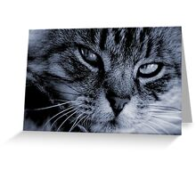LE CHAT I Greeting Card