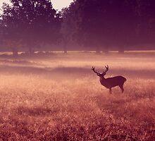 Deer at Dawn by purplejonno