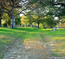 Cemetery in late afternoon light by john forrant