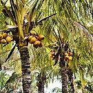 Coconut Palms by dez7