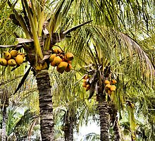 Coconut Palms by dez7