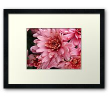 Fall Mums  Framed Print
