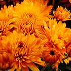Fall Mums by Tricia Stucenski