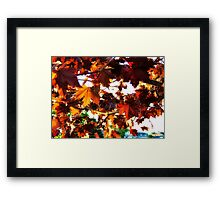 Fall Colors 2 Framed Print
