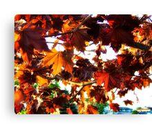 Fall Colors 2 Canvas Print