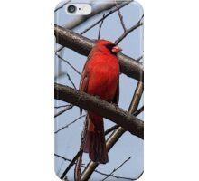 Northern Cardinal (iPhone Case) iPhone Case/Skin