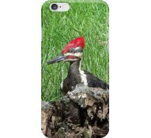 Pileated Woodpecker (iPhone Case) iPhone Case/Skin