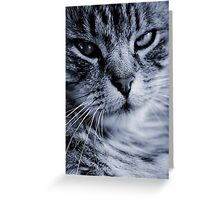 LE CHAT II Greeting Card