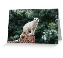 Slender-Tailed Meerkat Greeting Card