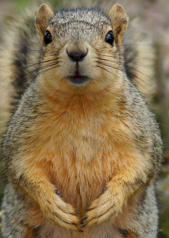You Have My Full Attention by Betsy  Seeton