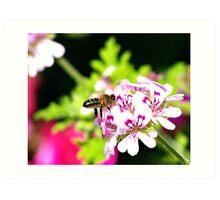 Spring Working Bee 2 Art Print